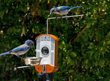 Bird Photo Booth: Take pics as birds feast on seeds