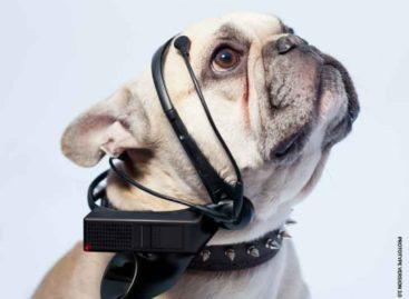 No More Woof translates dog barks into human speech