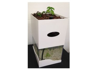 The Tabletop Aquaponics System