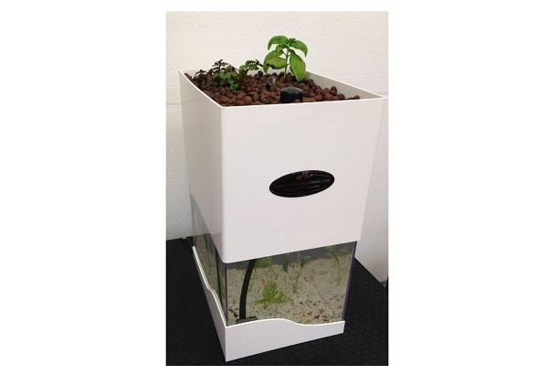 Tabletop Aquaponics System