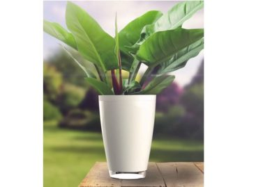 The Parrot Pot Waters Your Plants For You