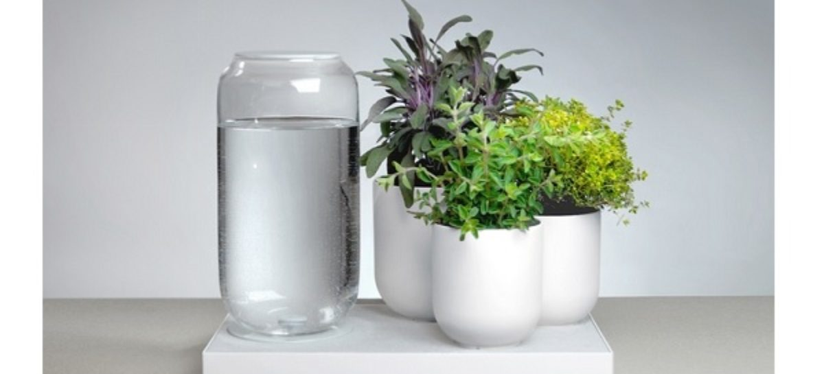 Tableau Automatic House Plant Watering Tray