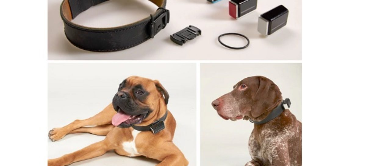 Jagger & Lewis Smart Dog Tracker