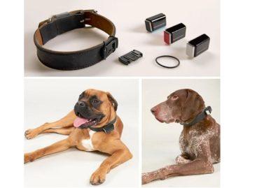 Jagger & Lewis Smart Dog Tracker