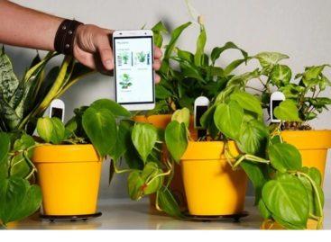 Greensens Smart Houseplant Sensors