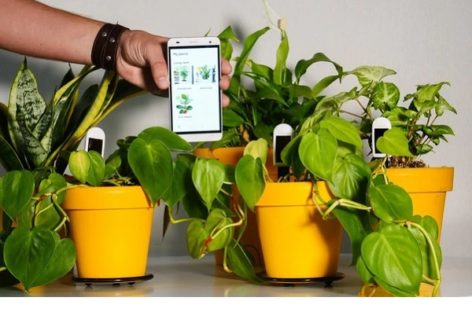Greensens Smart Houseplant Sensors